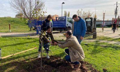 Alcalá primera ciudad árboles