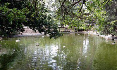 patos en el municipio de Parla