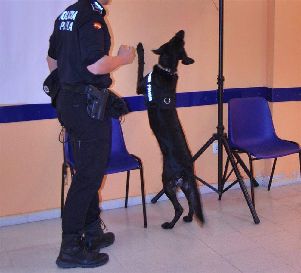 Policía Parla bienestar animal